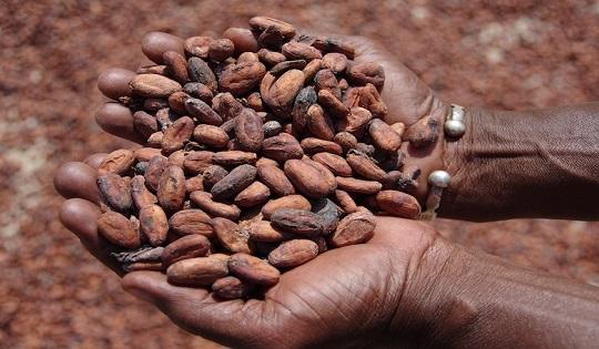 Ghana: il cioccolato non crea più dipendenza