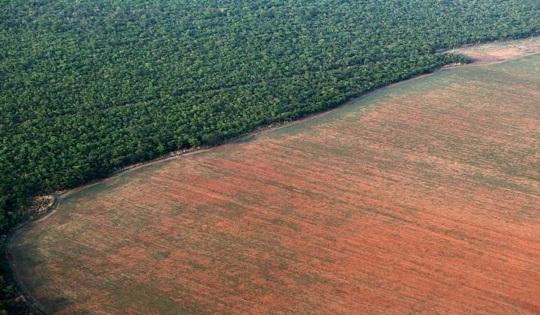 Amazzonia: la foresta quasi perduta